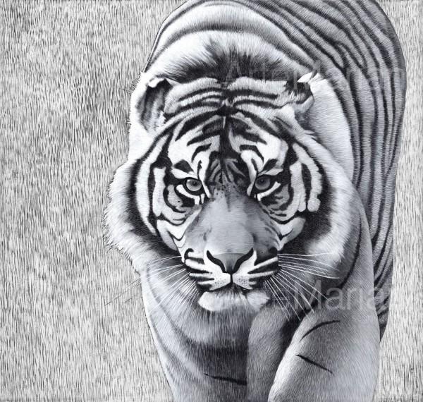 Tutta la bellezza e la forza della tigre in un affresco molto particolare realizzato da uno degli artisti Mariani